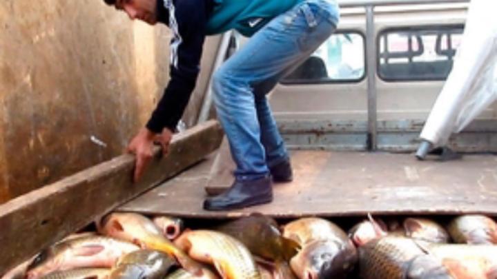 Санкционные рыбу и ягоды уничтожили на Дону