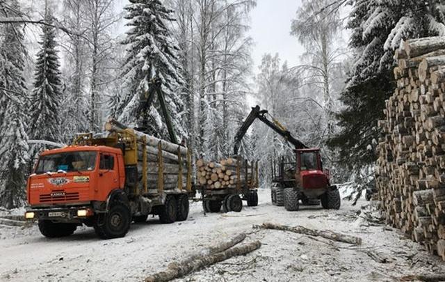 В январе леспромхозы ГК «Титан» заготовили более 243 тысяч кубометров древесины