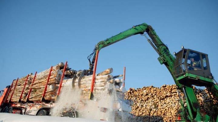 С начала года леспромхозы «Титана» заготовили более 512 тысяч кубометров древесины