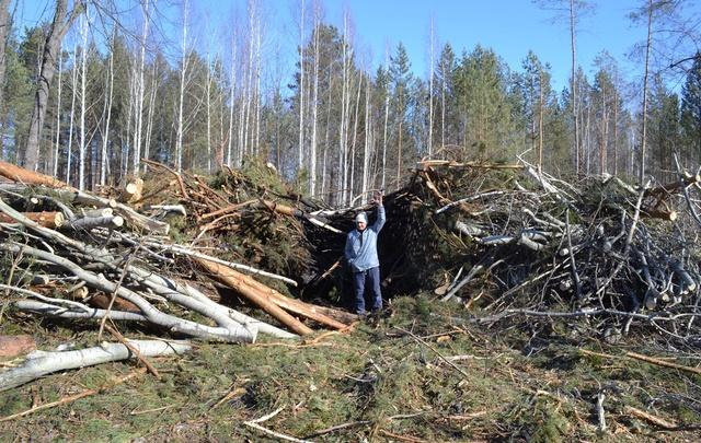 Сотрудника Тюменского фанерного завода оштрафовали за нарушения санитарных норм при вырубке леса