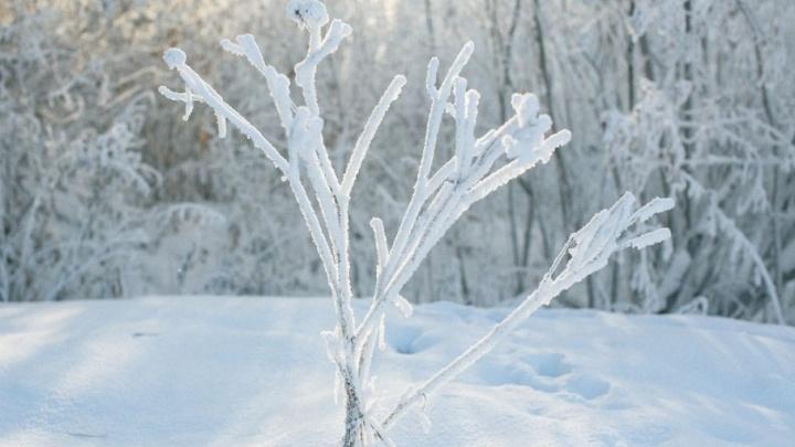 Зима очень близко: в выходные тюменцев ждет снег и понижение температуры до 12 градусов мороза