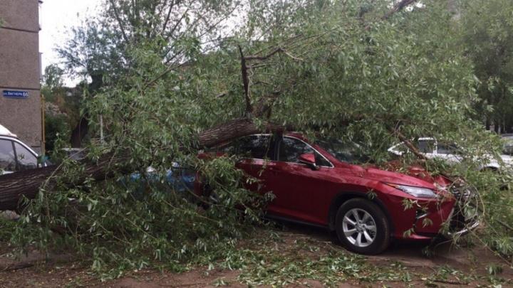 Челябинец отсудил деньги за машину, разбитую упавшим деревом во дворе
