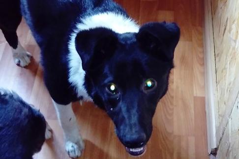 Спасение собаки, полгода прожившей под павильоном в Челябинске, сняли на видео