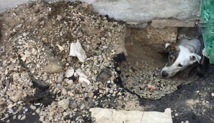 Очевидцы: в переулке Братском дорожники замуровали пса