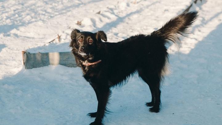 С новым пёсом! 11 историй собак из тюменского приюта, которые ищут добрых и ласковых хозяев