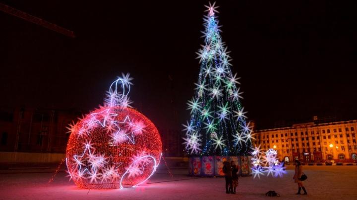 Волгоград отметит Новый год праздничным «Собака-шоу»