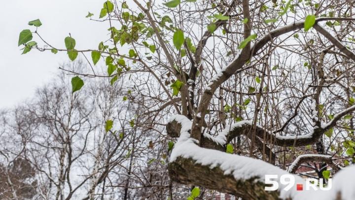 Ночью — до -3 °С: МЧС предупредило жителей Прикамья о заморозках