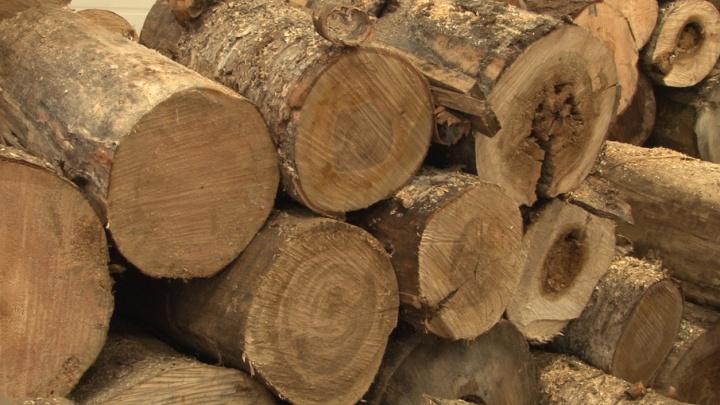 При заготовке леса в Красноборском районе мужчину придавило деревьями