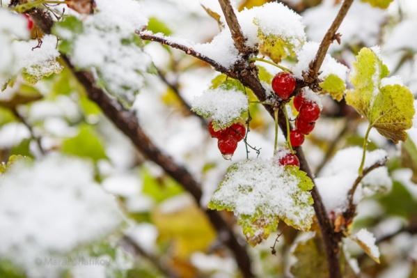 Красивый снег превращается на дорогах в грязную кашу, грозящую увечьями