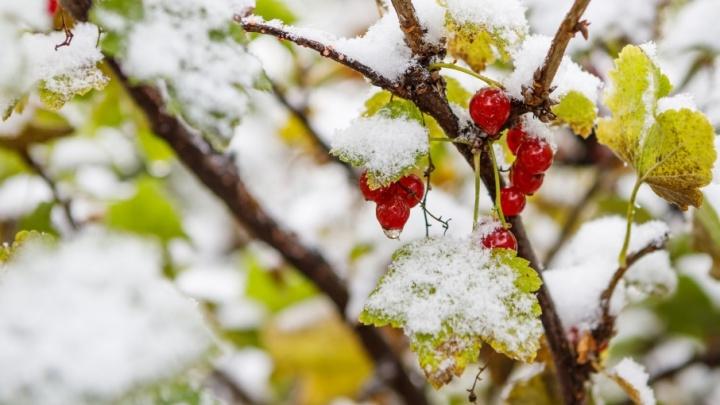 Мокрый снег и рост числа ДТП: в МЧС предупредили южноуральцев об ухудшении погоды