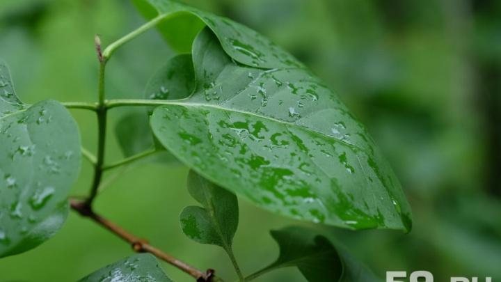 Лето ушло: всю неделю в Перми будут идти дожди