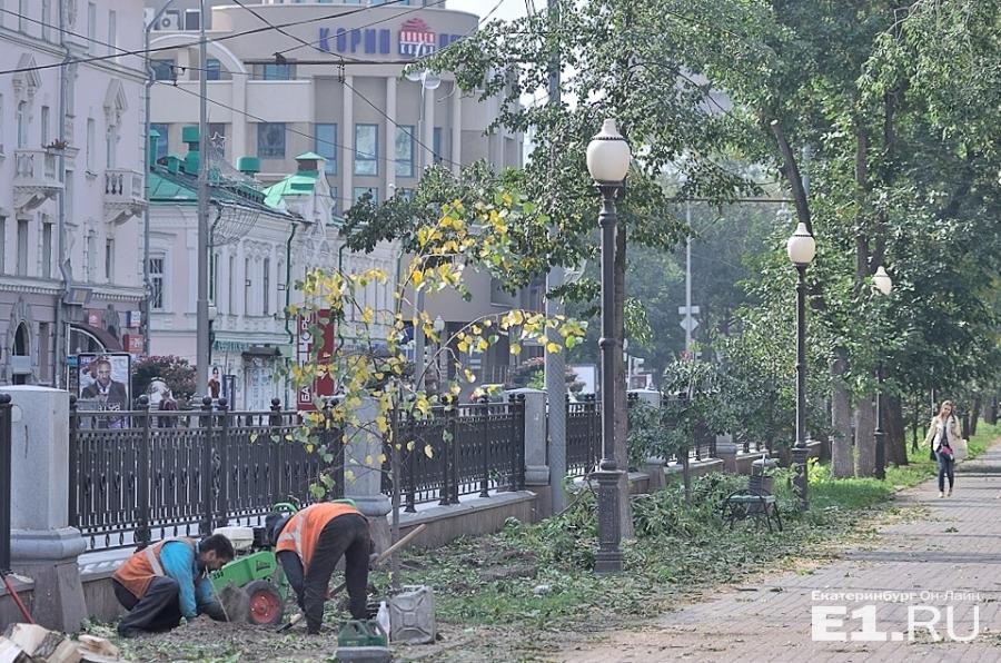 Старые деревья в сквере на проспекте Ленина вырубили несколько лет назад.