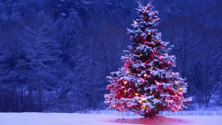 Ёлки-2018: в Поморье назвали цены на новогодних красавиц