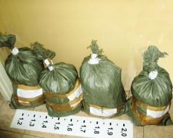 Переславец отдал в ФСКН четыре мешка марихуаны, купленных «для себя»