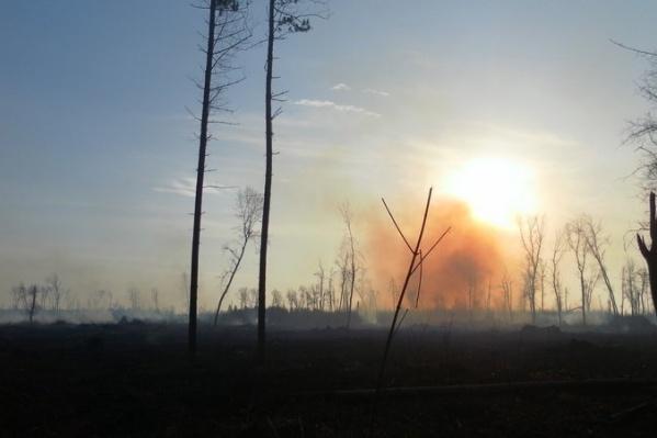 Вместо леса жители любуются на выжженный пустырь