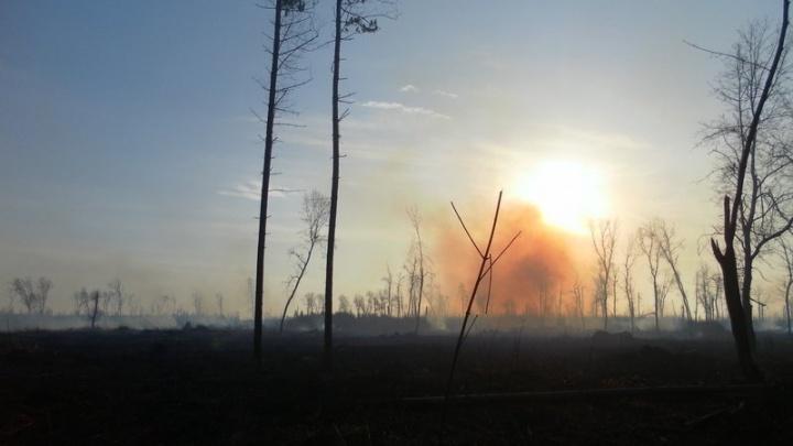 «Спасти лес-смертник»: тольяттинцы собирают подписи в защиту местной природы