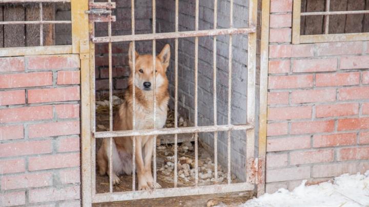 Защитники животных: Самаре нужны новые приюты