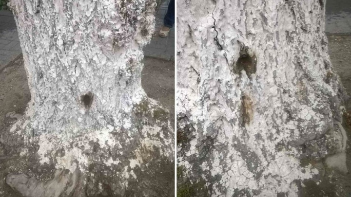 Чиновники не в силах остановить волну отравлений деревьев в Волгограде