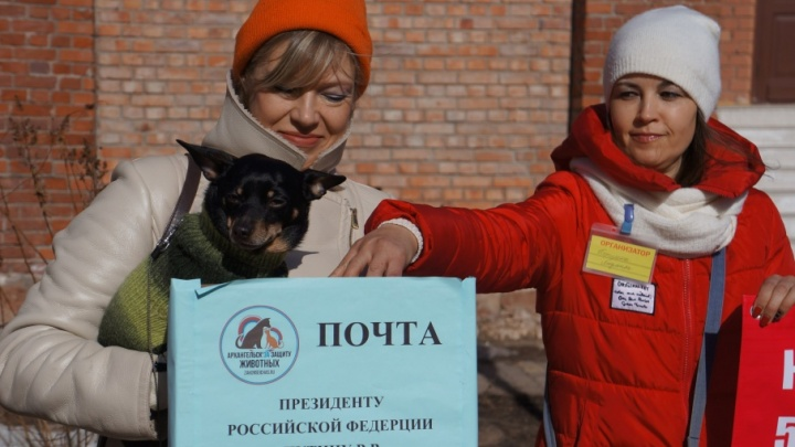 Стань моим голосом: зоозащитники Архангельска высказались за принятие закона о животных