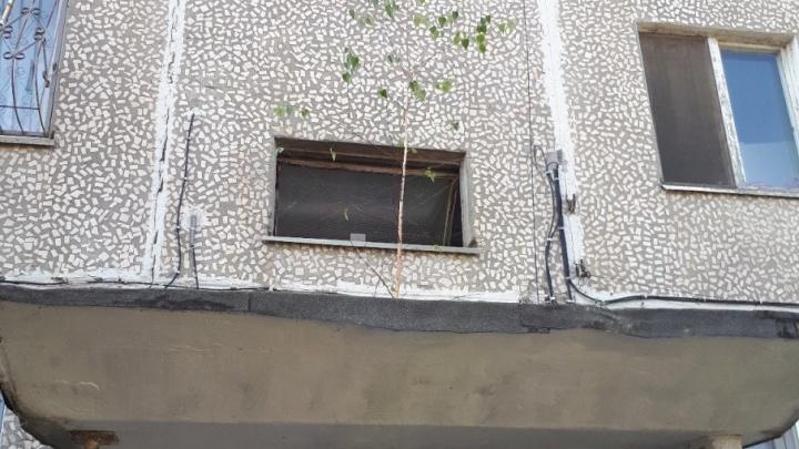 На козырьке подъезда одного из домов Волгограда выросло дерево