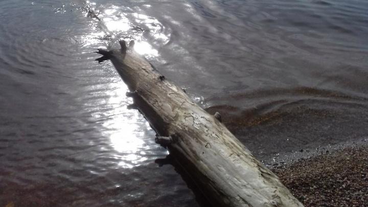 В Ярославской области 7-летняя девочка упала в реку: ребенка ищут спасатели