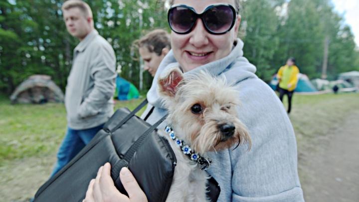 В новом микрорайоне Челябинска сделают площадку для выгула собак
