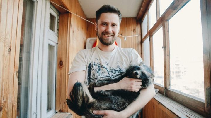 Впадает в спячку на балконе, боится высоты и любит арбузы: тюменец рассказал, как у него появилась енотовидная собака Соня
