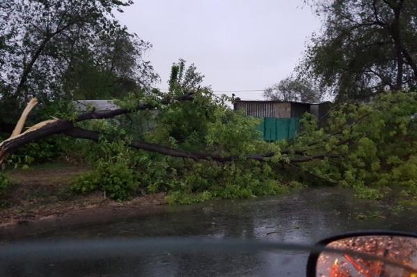 Более 80 деревьев повалило в области из-за урагана