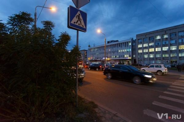 Этот куст уже попортил немало нервов и местным автомобилистам, и пешеходам