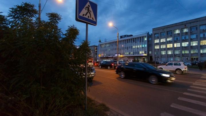 Горожане просят убрать из центра Волгограда «кусты-убийцы»