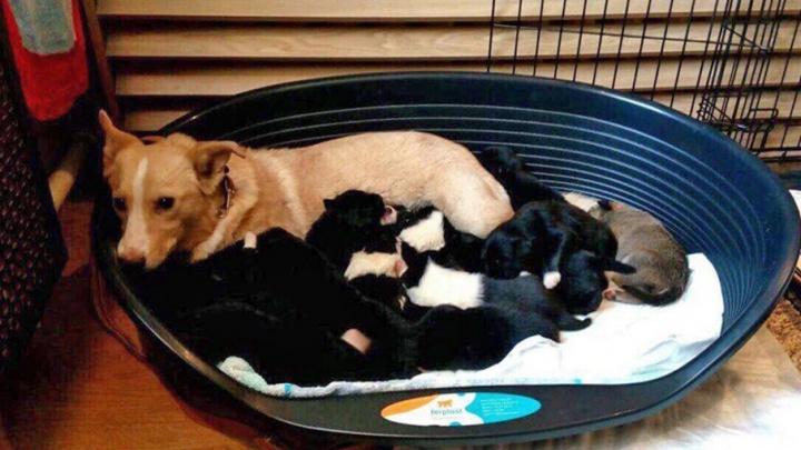 Волонтеры и слесари достали из подвала дома в центре Ярославля маму четырнадцати щенков