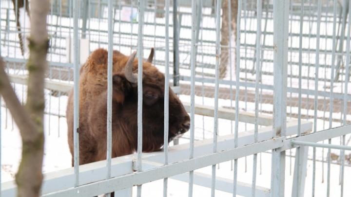 Зимняя акция: детей с санками будут впускать в ростовский зоопарк бесплатно