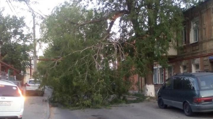 Упавшая ветка дерева перегородила дорогу на Республиканской