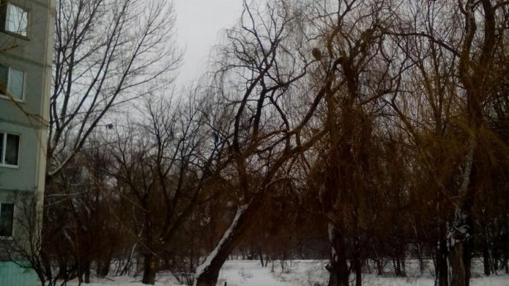 В Кировском районе Волгограда надломившаяся ветка больше полугода ждет своих жертв