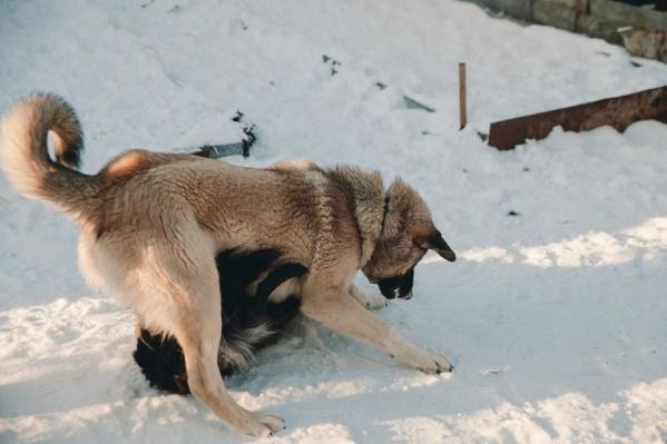 Местные жители уже давно жалуются на стаи бездомных собак