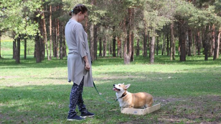 На Волжской набережной расставят урны для собачьих кучек