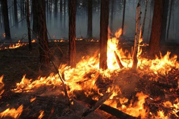 Все возгорания потушили в первые сутки