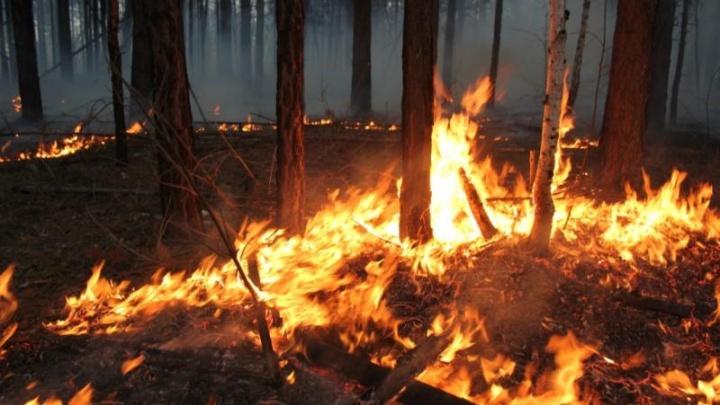 В Тюменской области 558 человек оштрафовали за сжигание травы и мусора