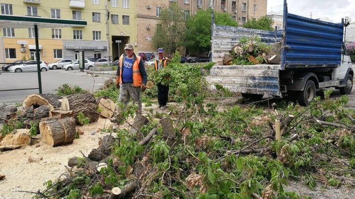 Улицу в центре Волгограда перекрыли для обрезки деревьев