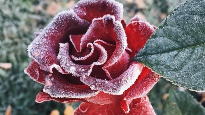 Утепляемся и включаем обогреватели: на Южный Урал надвигаются заморозки
