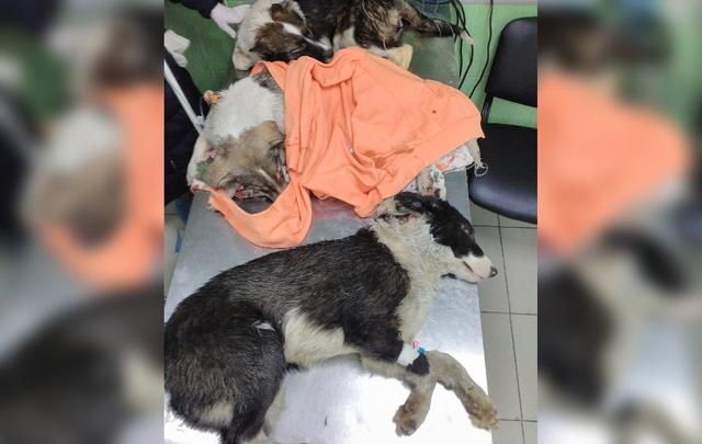Эксперты: щенки из муниципального приюта погибли из-за издевательств людей