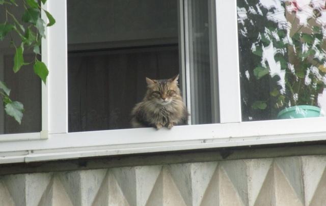 Архангелогородец выпрыгнул из окна третьего этажа, чтобы спасти кошку