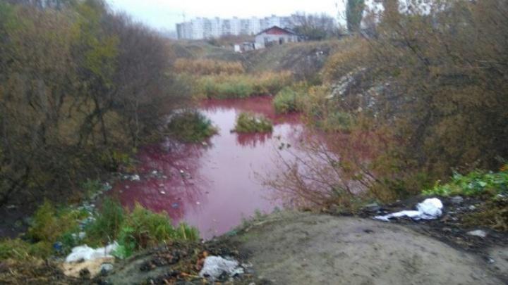 В Краснооктябрьском районе нашли розовое озеро