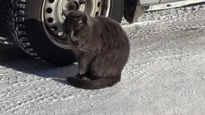 Рыбинский Хатико: котик сидит у подъезда несколько месяцев