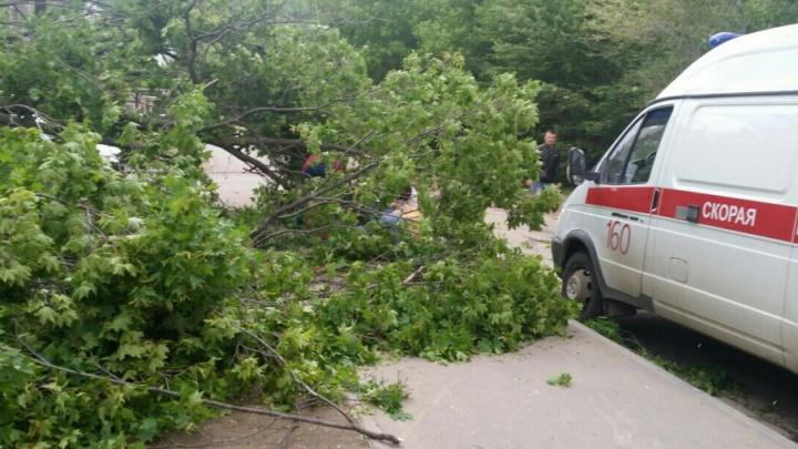 В Самаре на человека рухнуло дерево: мужчина потерял сознание