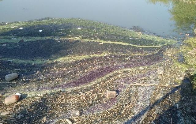 Огромное маслянистое пятно появилось в пруду ростовского Ботанического сада