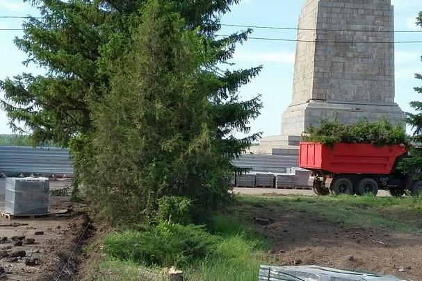 При реконструкции парка в Волгограде массово вырубают ели