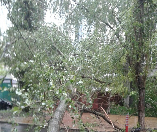 В Ростове возле школы упало дерево