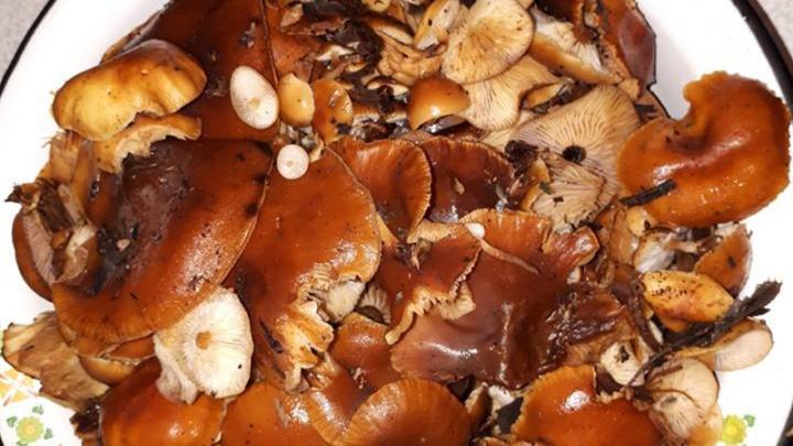 В новогодние каникулы ярославцы собирают грибы