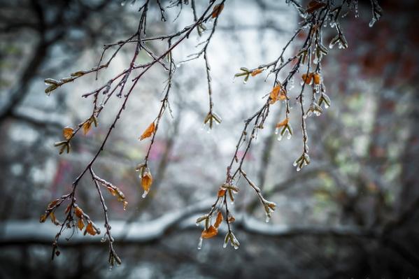 Мокрый снег ночью, солнце и небольшие дожди – днем